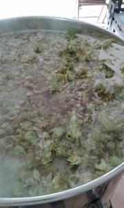 bollitura luppoli coltivati